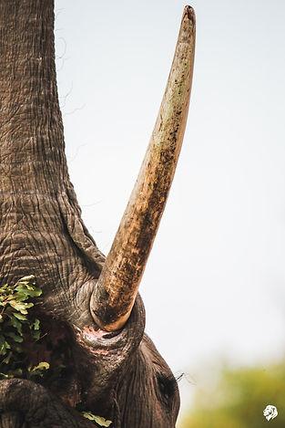 ELEPHANTS (1 of 1).jpg