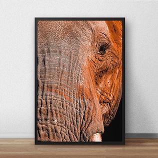 elephantprint2.jpg