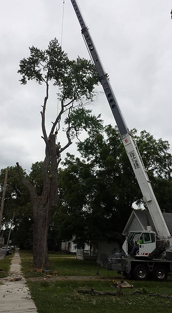 Large Storm Damage Clean up, Tree removal, Tree Service Crane