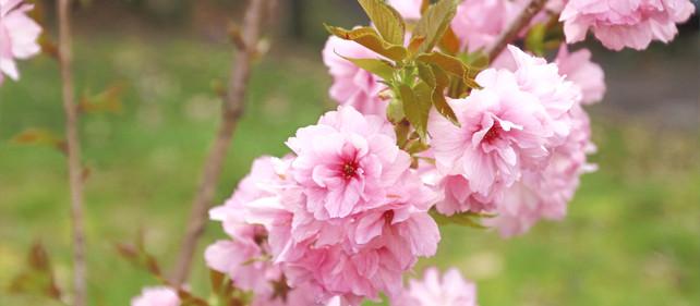 女神の豊かな創造は春の支度できまる🌸