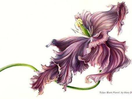"Classes at ""POD – Botanical art space in Transylvania"" start soon!"