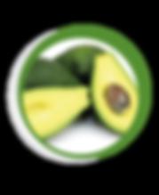 Navegant per Cambrils - Revista de Cambrils - Aliment del Mes - L'Alvocat