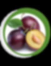 Navegant per Cambrils - Revista de Cambrils - Aliment del Mes - La Pruna