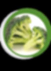 Navegant per Cambrils - Revista de Cambrils - Aliment del Mes - El Bròquil