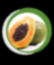 Navegant per Cambrils - Revista de Cambrils - Aliment del Mes - La Papaia
