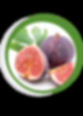Navegant per Cambrils - Revista de Cambrils - Aliment del Mes - Les Figues