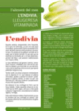Navegant per Cambrils - Revista de Cambrils - Aliment del Mes - L'endivia - Nutrició - Valor nutricional - aliment
