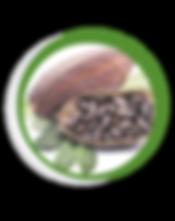 Navegant per Cambrils - Revista de Cambrils - Aliment del Mes - Salut - cacao - xocolata - ingredient