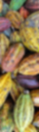 cocoa_edited.jpg