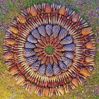 pinecone mandala.jpg