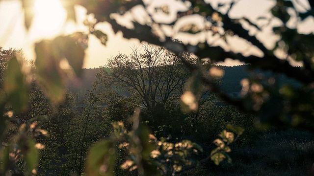 trees_sunset.jpg