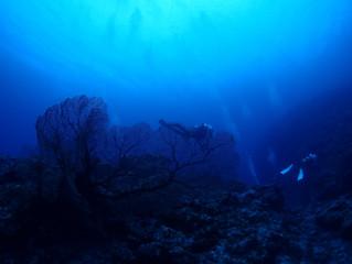 沖縄でウミガメに高確率で会える!?慶良間諸島へ!!