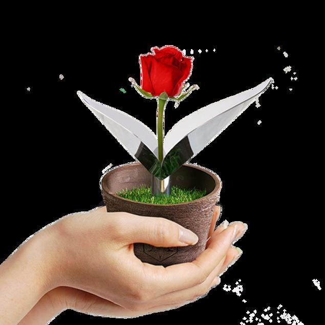 La Nolina posacenere autoestinguente vaso fiori design