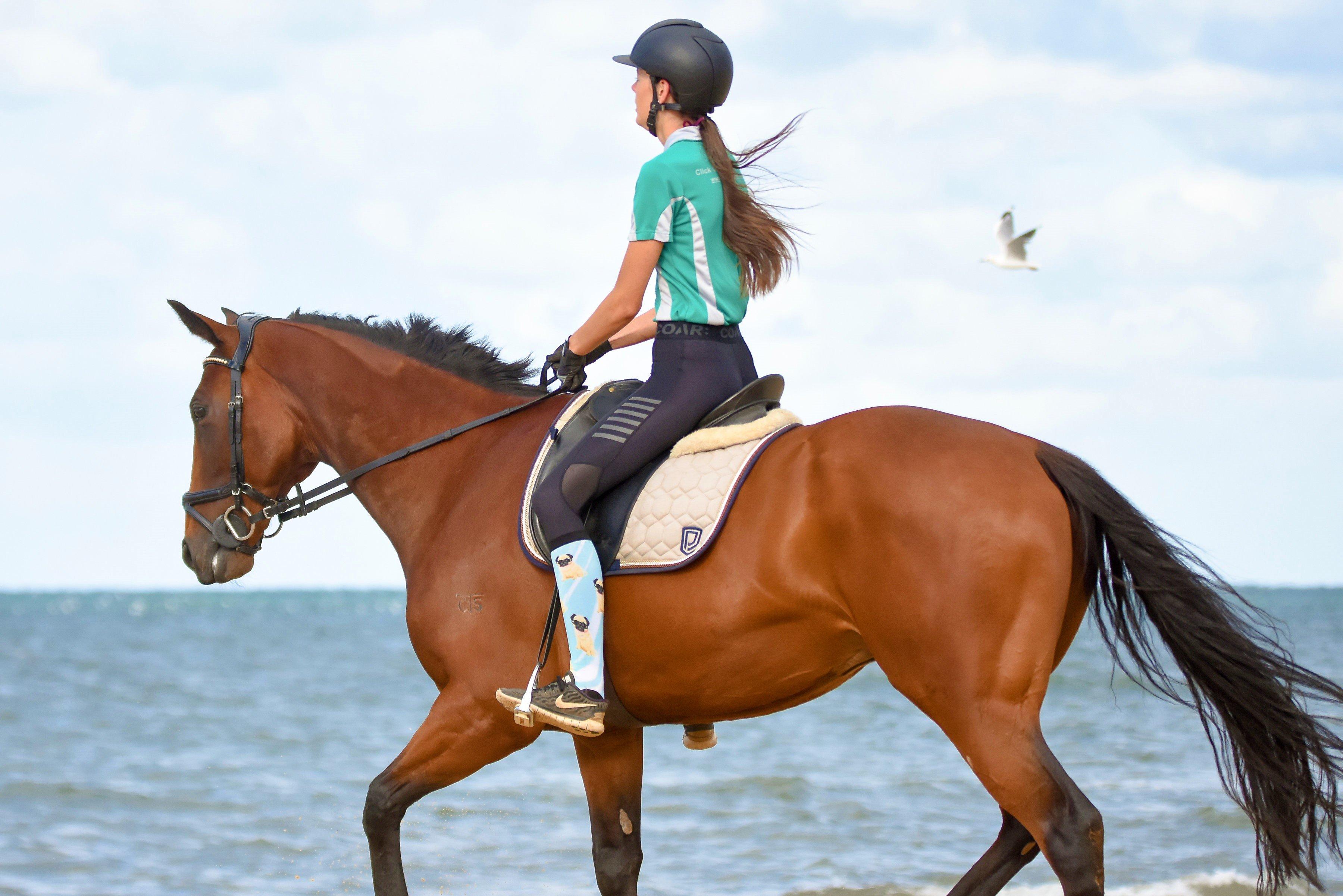 pug_life_horse_riding_socks_beach
