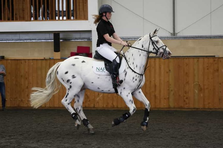 jumping-position-for-horse-riding