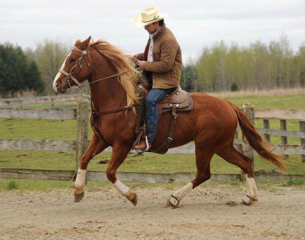 Western-Horseback-Riding-Western-Riding1