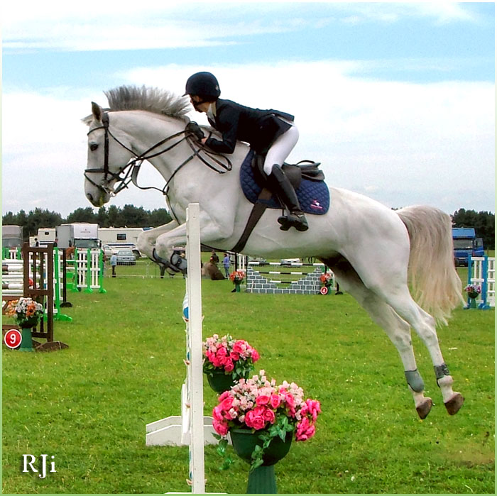 horses-27871
