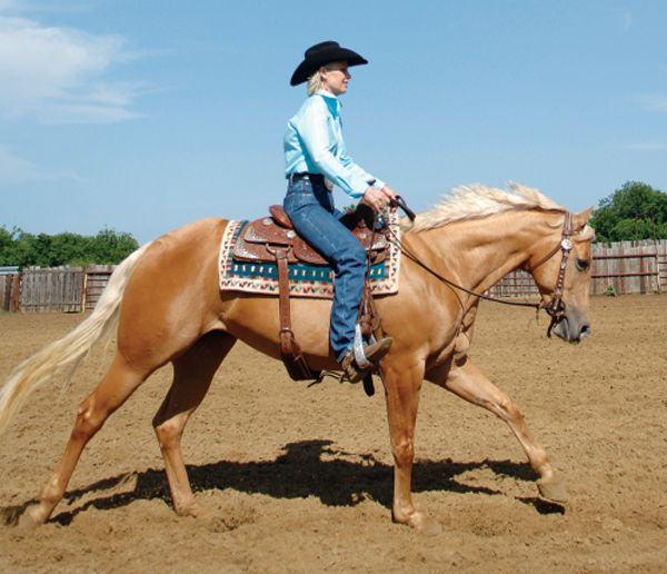 49c6448554f833ff7093211f7959b0b5--horse-