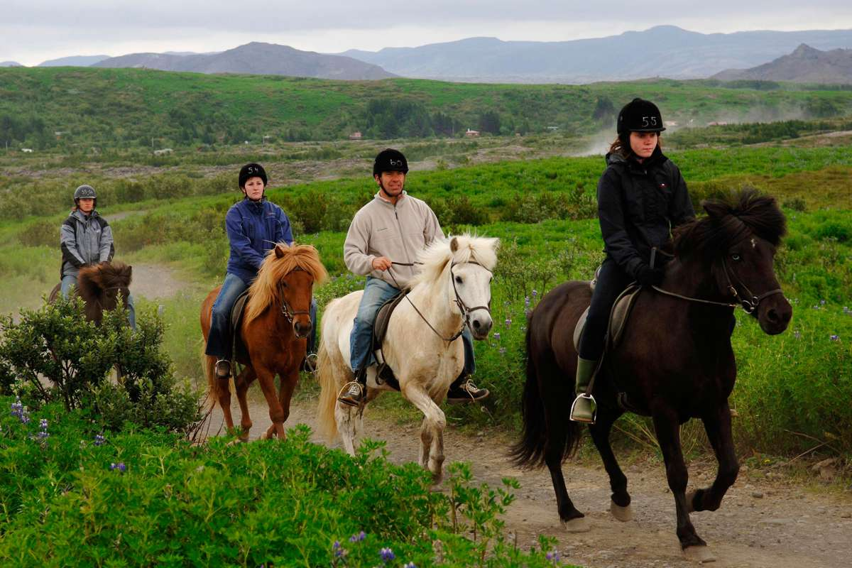 Horse-riding-tour-Iceland-3-1200x800