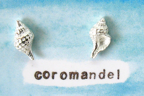 w Coro shells