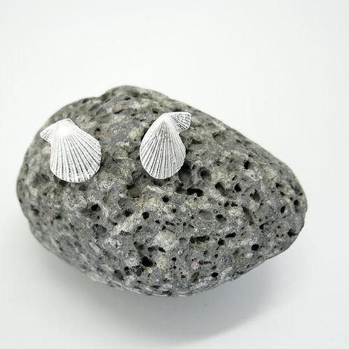 nelson shell studs