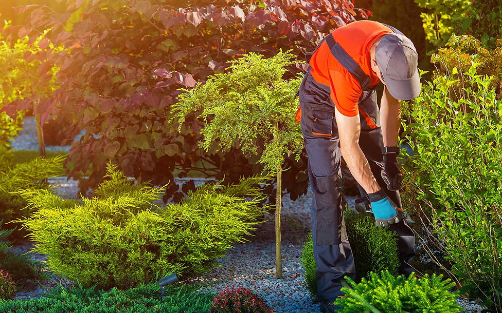 Landscaping-Services.jpg