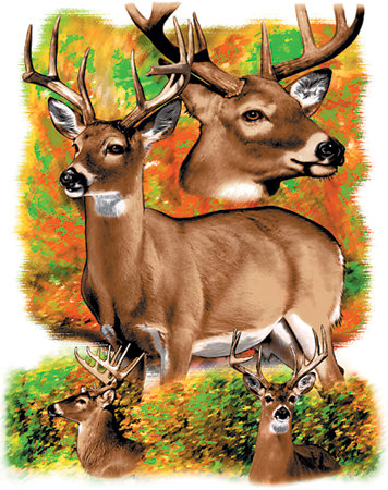 Whitetail Deer T-shirt Transfers 12pc