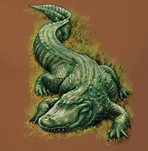 alligator t-shirt transfers