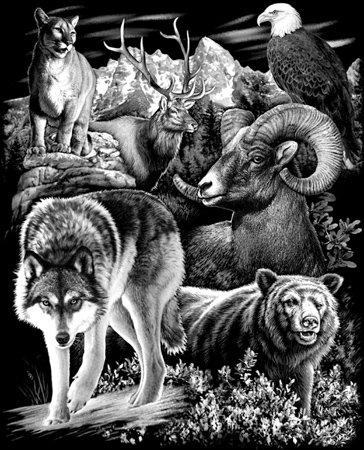 Mountain Wildlife T-shirt Transfers 12pc