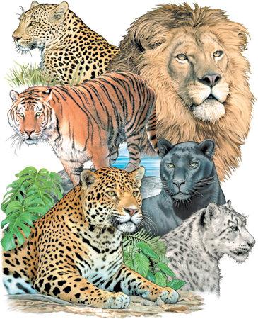 Big Cats T-shirt Transfers 12pc