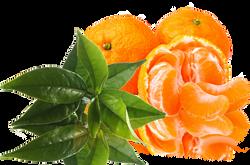 mandarin-green-tea