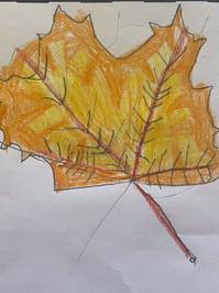 YR1 Leaf Sketch.jpg
