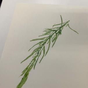 Leaf monoprinting.jpg