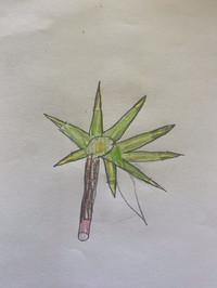 plant sketch.jpg