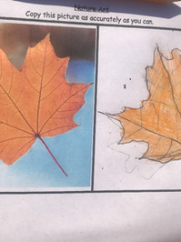 Leaf Sketch.jpg