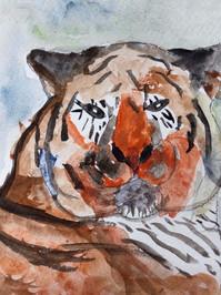 Water colour sumatran tiger.jpg