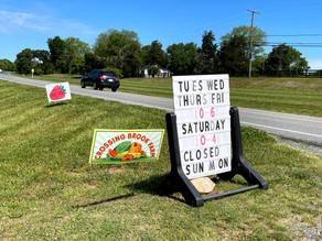 Pick strawberries (and more) at Crossing Brook Farm