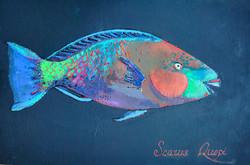 Scarus Quopi(рыба-попугай)