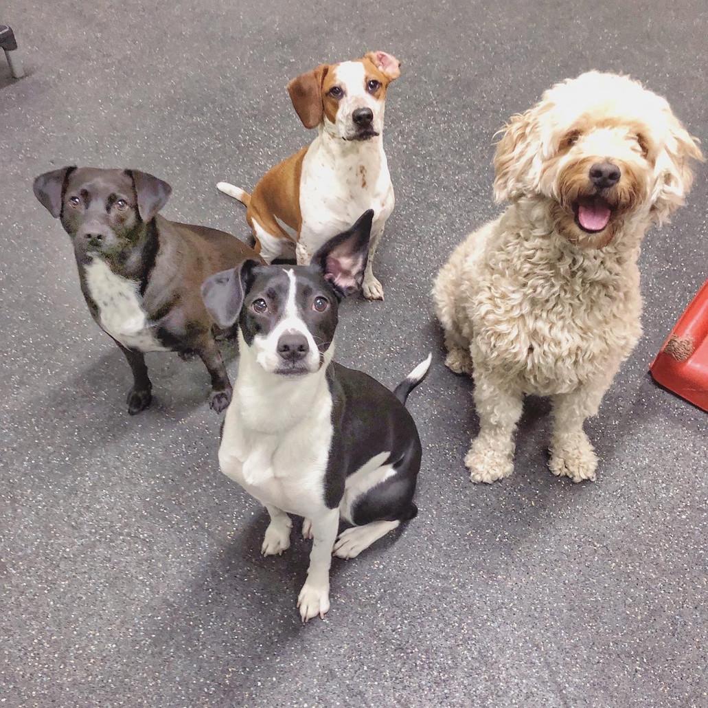 Harbor Dogs