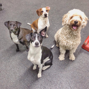 A group of dogs from our mid-size playfloor, Harbor