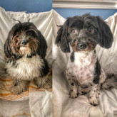Grooming Before & Afters