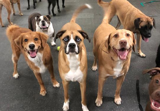 Boardwalk dogs.jpg