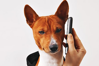 Can-Dogs-Hear-Cell-Phones_edited.png