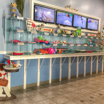 Doggy daycare front lobby, reception and retail
