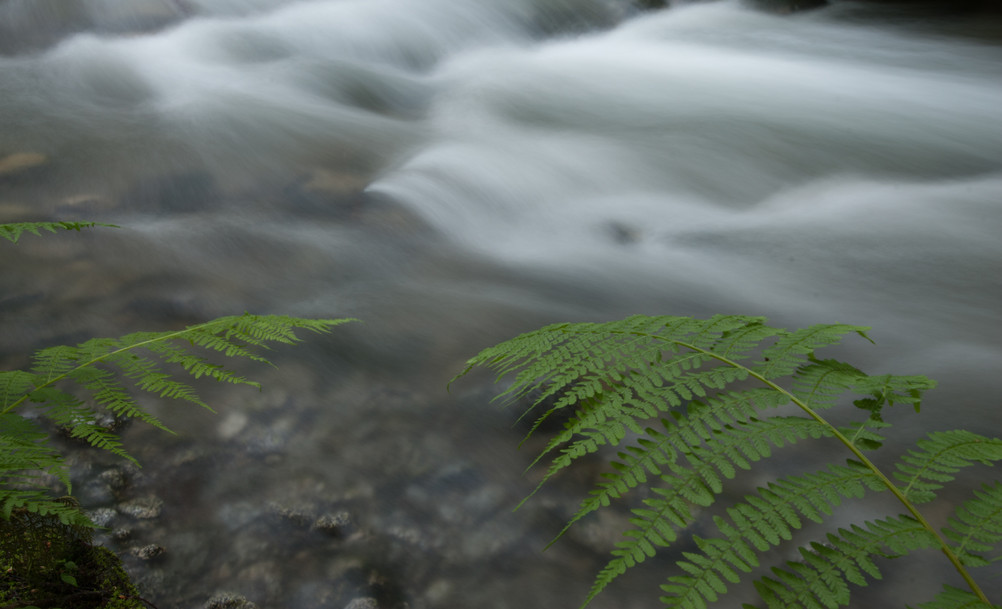 Fern over creek