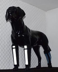 Demo dog with fluorescent dog leggings.J