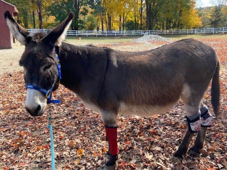 Magical Miniature Donkeys