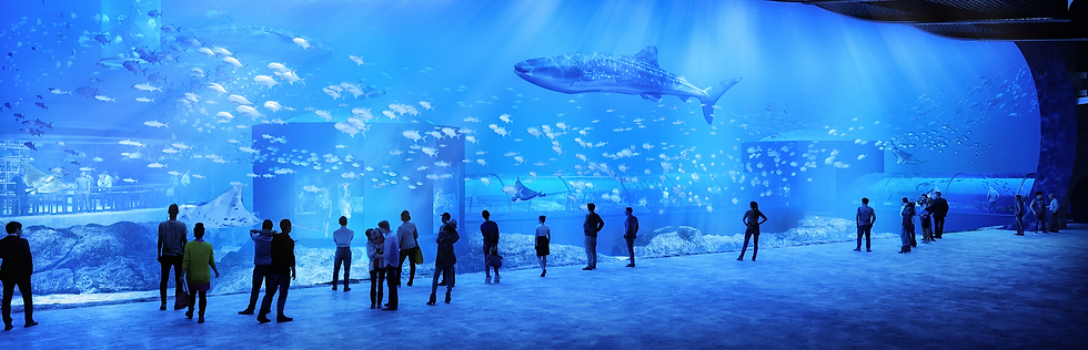 400WhaleSharks_HR02_edited_edited.png