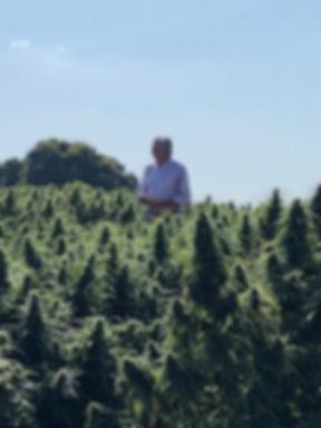 high-cbd-seeds, hemp seeds, growing hemp