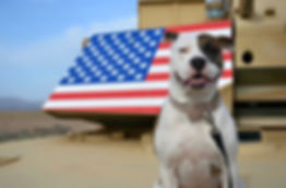 boise dog training, dog training boise, doggy daycare boise, dog daycare boise, boise id dog daycare